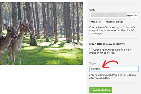 Add tags to your photos
