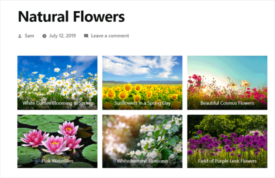 Preview of WordPress Photo Gallery Using Default Gallery Block